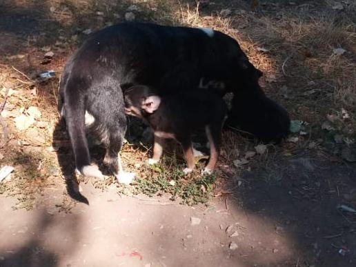 Николаевские спасатели спасли щенка - вытащили из колодца (ФОТО) 5