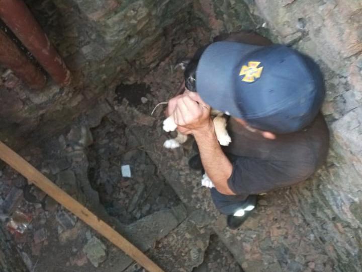 Николаевские спасатели спасли щенка - вытащили из колодца (ФОТО) 1