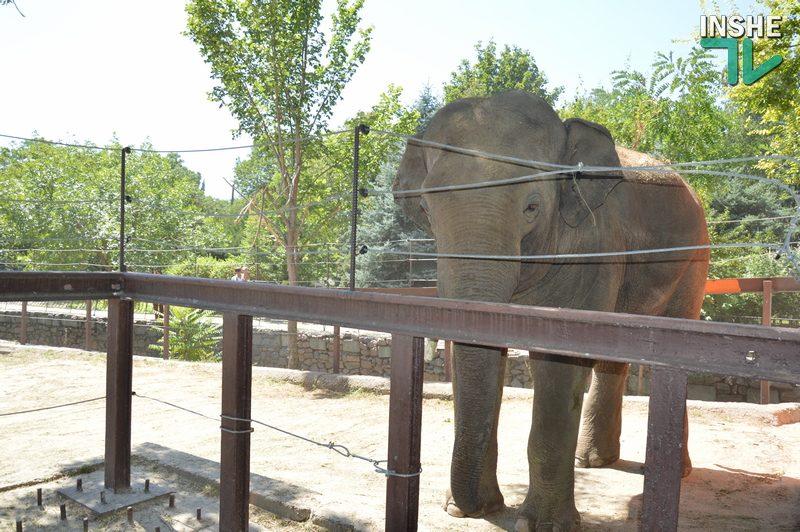 В Николаевском зоопарке отметили день рождения слона Динкара (ФОТО, ВИДЕО)