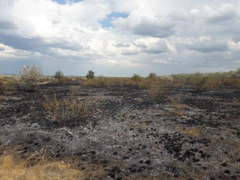 На Николаевщине выгорело 6 га открытых территорий (ФОТО)