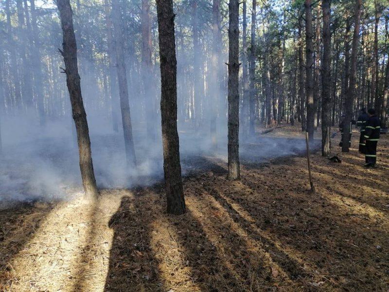 На Николаевщине за сегодня дважды горели леса – их намеренно подожгли (ФОТО)