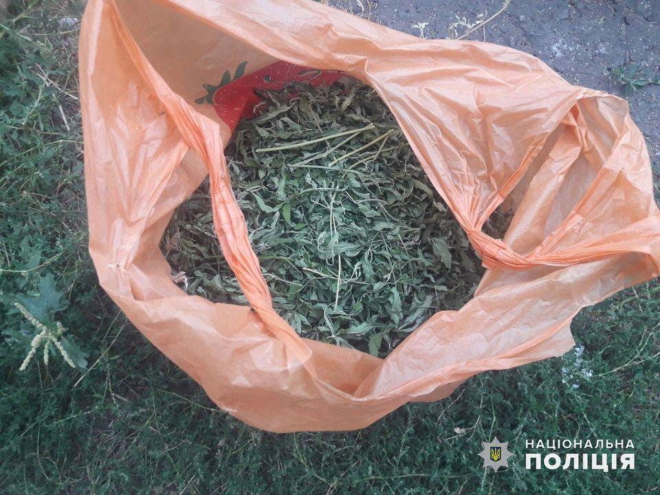 «Вырастил как спасение от зубной боли»: на Николаевщине изъяли 1,5 кг марихуаны и почти 240 кустов конопли (ФОТО) 9