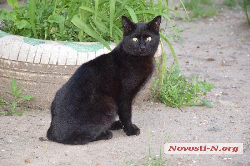 В Николаеве ищут водителя «Ланоса» – сломал ногу женщине, пытавшейся спасти кота