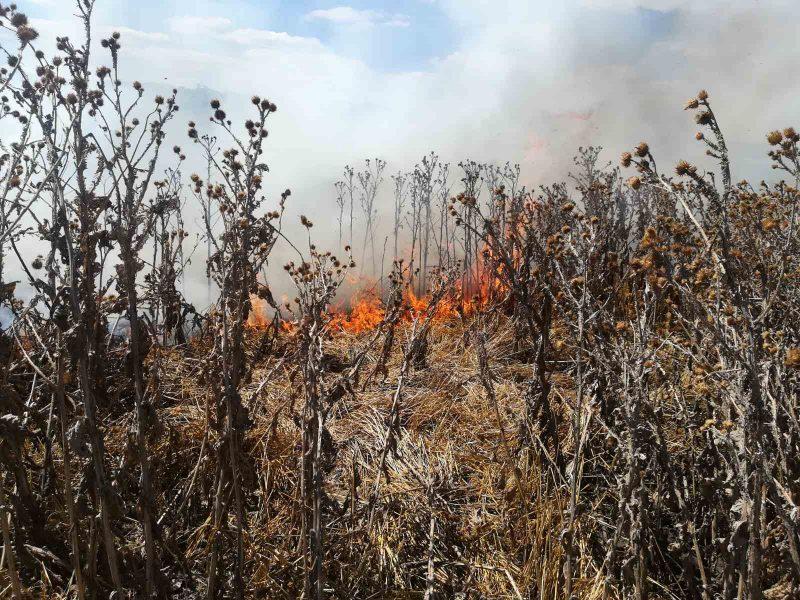 На Николаевщине за прошедшие сутки выгорело более 22 га сухостоя (ФОТО)