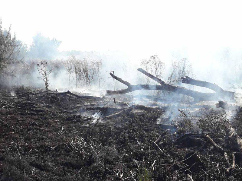 На Николаевщине за сутки потушили 11 пожаров на открытых территориях (ФОТО)
