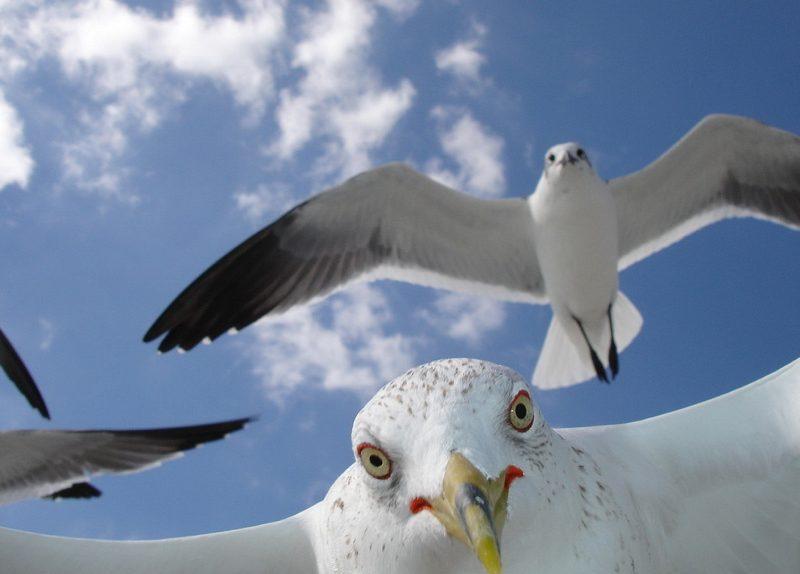 Убежать не удалось, — чайки нагло отобрали еду у туристки на пляже (ВИДЕО)