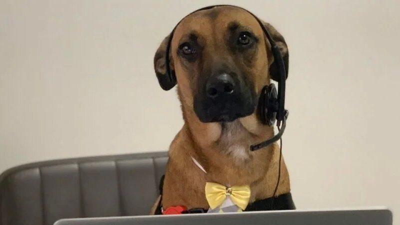 Бездомный пес не уставал приходить в автосалон. Теперь его взяли на работу, выдали бейджик и готовят к роли в рекламе (ФОТО)