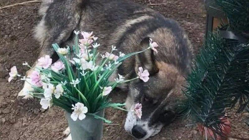 В Криворожском районе нашли украинского Хатико — этот пес уже три года живет возле могилы хозяина (ФОТО)