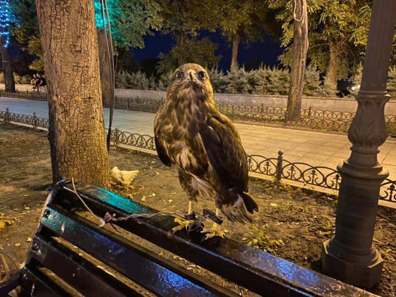 """В одесский зоопарк принесли хищную птицу, изъятую у """"уличных фотографов"""""""