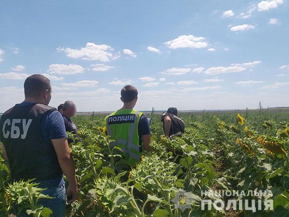 На Николаевщине накрыли плантацию конопли на 29 млн.грн (ФОТО, ВИДЕО)