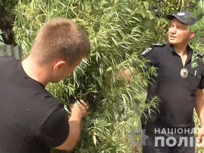В Новом Буге полицейские пришли к мужчине, который вырастил на огороде 433 куста конопли (ФОТО)