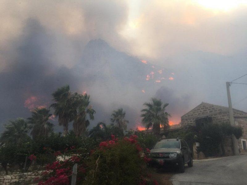 Заповедник на Сицилии уничтожен пожаром (ФОТО)