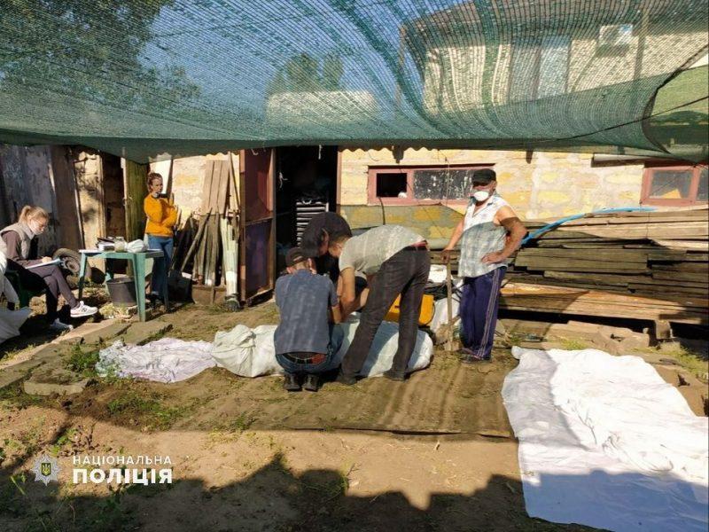 В Центральном районе Николаева в День города изъяли 28 кустов конопли (ФОТО)