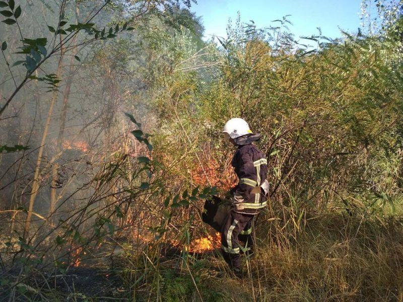 На Николаевщине за сутки выгорело более 29 га открытых территорий (ФОТО)