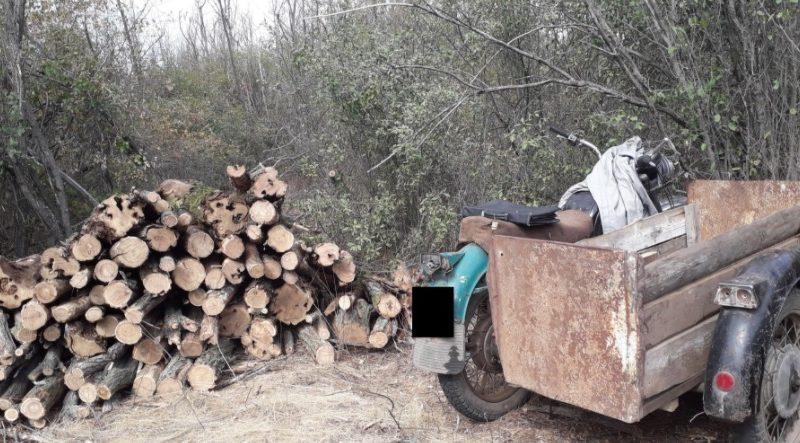 В Новобугском районе в лесополосе спилили 68 деревьев – полиция открыла уголовное производство