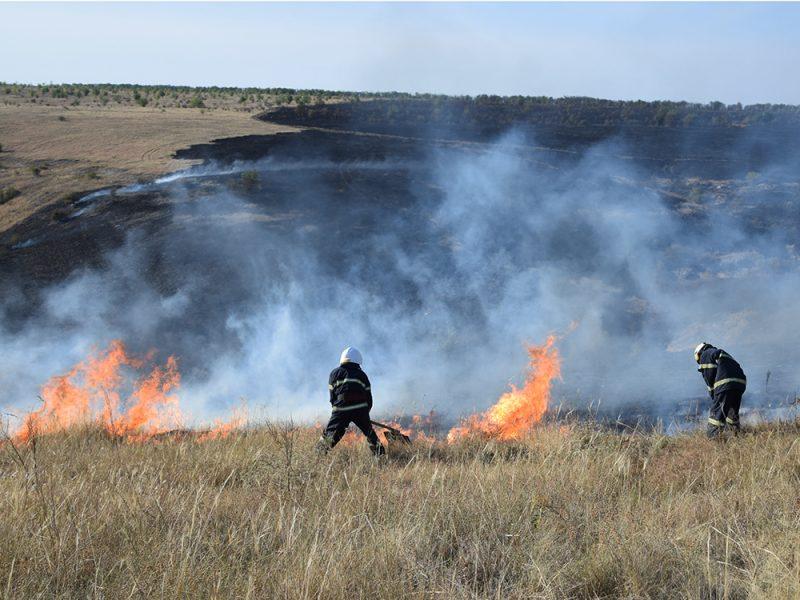 На Николаевщине спасли 22 бизона от гибели в огне – потушили пожар в заповеднике (ВИДЕО)