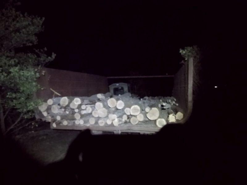 На Николаевщине задержали «черных лесорубов» – они успели напилить три куба дуба