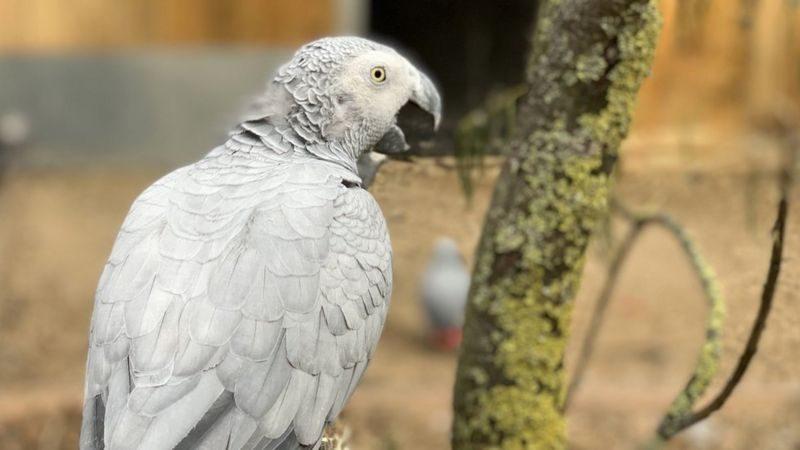 В британском зоопарке пришлось рассадить по разным вольерам попугаев, которые хором «крыли матом и загаром» посетителей