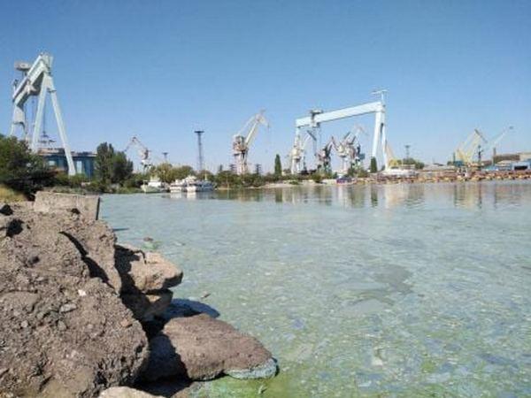 Вода цветет: в ГЭИ озвучили результаты исследований воды на Каботажном молу в Николаеве