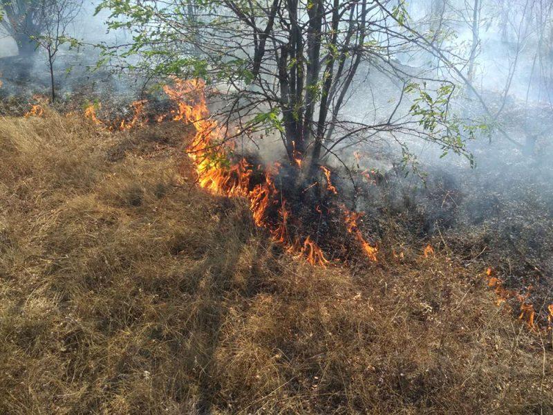 На Николаевщине за сутки выгорело более 8 га открытых территорий (ФОТО)