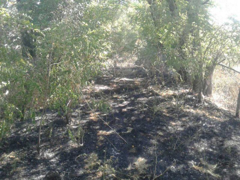 Спасатели Николаевщины за сутки 15 раз выезжали тушить пожары на открытых территориях (ФОТО)