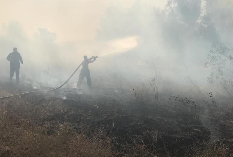 На Николаевщине подожгли камыш – огонь распространился на 4,5 га (ФОТО)