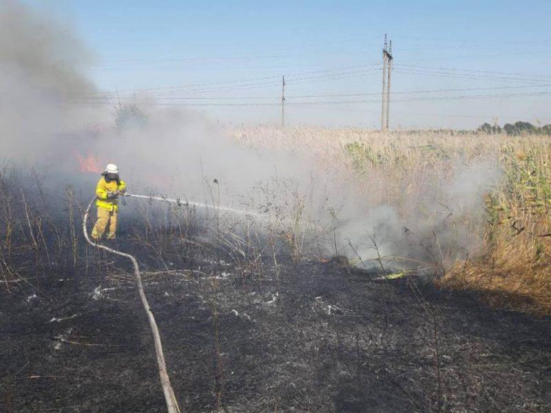 Неизвестные подожгли Матвеевский лес, в целом по Николаевской области за сутки потушили 20 пожаров на открытой территории (ФОТО)