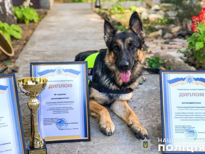 Николаевская полицейская овчарка Мэри на чемпионате завоевала первенство в лучшей выборке ассистента в соревнованиях специальной подготовки розыскных собак (ФОТО)