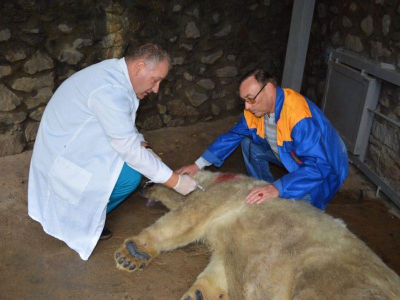 Как в Николаевском зоопарке белую медведицу Сметанку переселяли (ФОТО, ВИДЕО)