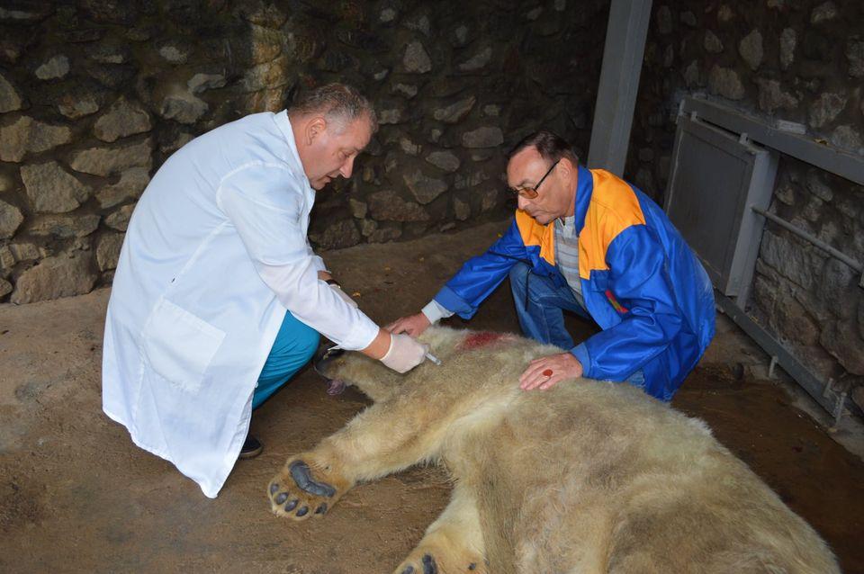 Как в Николаевском зоопарке белую медведицу Сметанку переселяли (ФОТО, ВИДЕО) 5