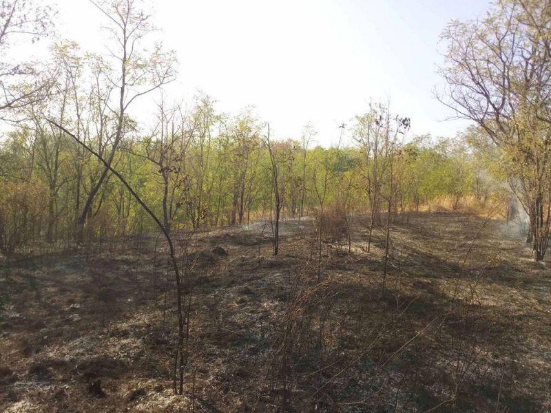 На Николаевщине горела не только сухая трава, а и молодой лес на площади 1,6 га (ФОТО)