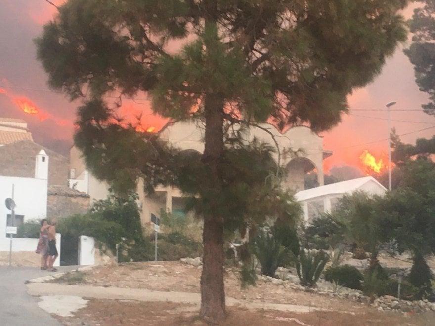 Заповедник на Сицилии уничтожен пожаром (ФОТО) 11
