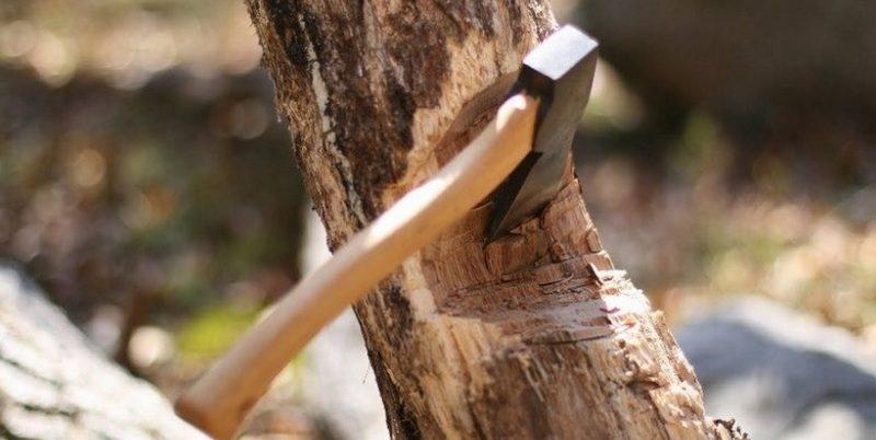 За один день в Николаеве незаконно спилили 21 дерево и повредили 3 (ВИДЕО)
