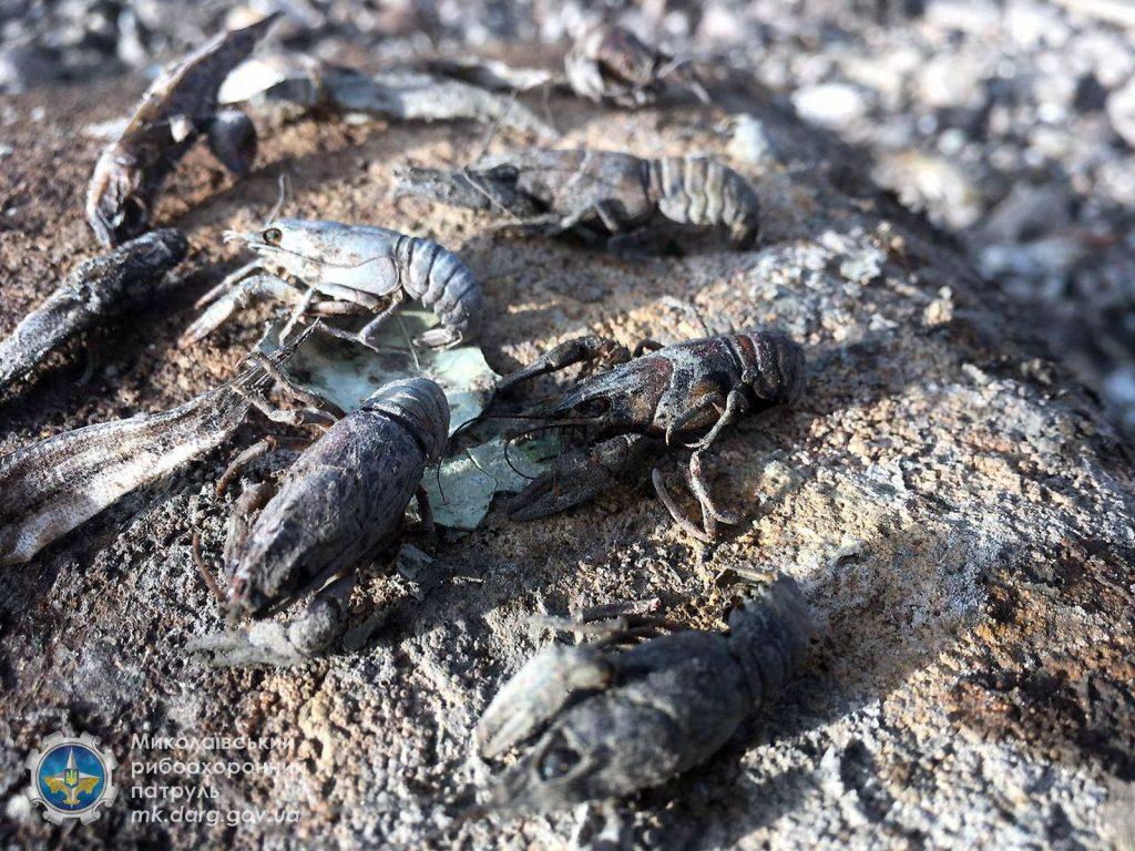 Катастрофа. Из-за ремонта Первомайской ГЭС погибли миллионы рыб, город остался без воды (ФОТО, ВИДЕО) 3