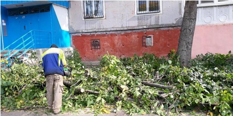 В Николаеве самовольно кронировали 9 деревьев – Госэкоинспекция привлекла нарушителя к админответственности