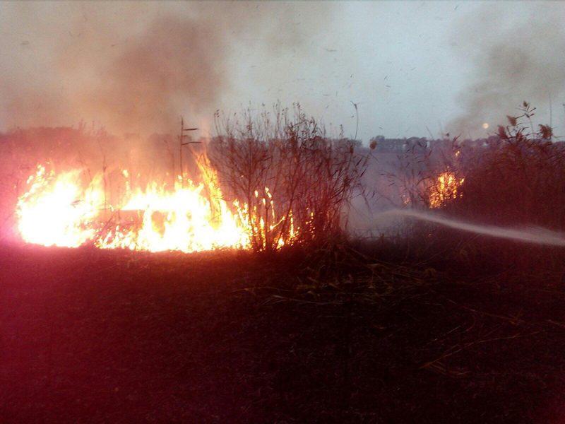 Камыш, сухостой и мусор: что тушили спасатели Николаевщины на открытых территориях за сутки (ФОТО)