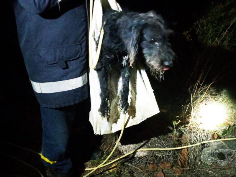 На Николаевщине спасатели вытащили собаку из 20-метрового колодца (ФОТО)