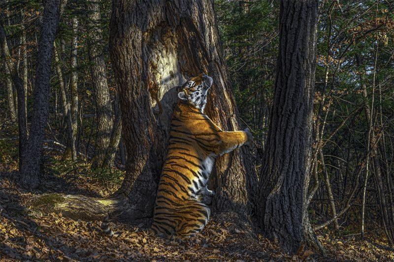 Названы лучшие фотографии дикой природы-2020 (ФОТО)