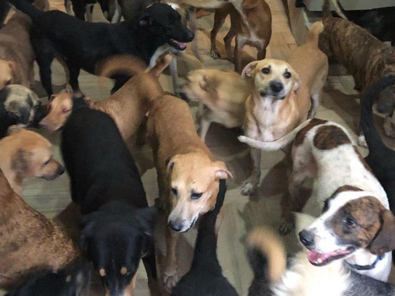 Житель Мексики забрал домой 300 животных из приюта, чтобы спасти их от урагана (ФОТО, ВИДЕО)