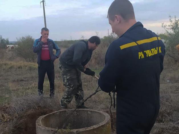 В Вознесенске спасатели достали из неэксплуатируемого коммуникационного колодца бычка (ФОТО) 3