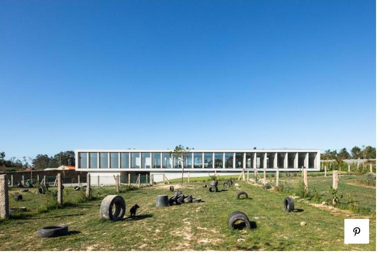 Можно только позавидовать: в Португалии открыли отель люкс для кошек и собак (ФОТО)