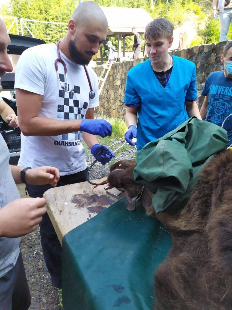Украинским медведям подлечили зубы и вакцинировали (ФОТО) 5