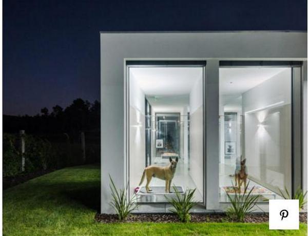 Можно только позавидовать: в Португалии открыли отель люкс для кошек и собак (ФОТО) 1