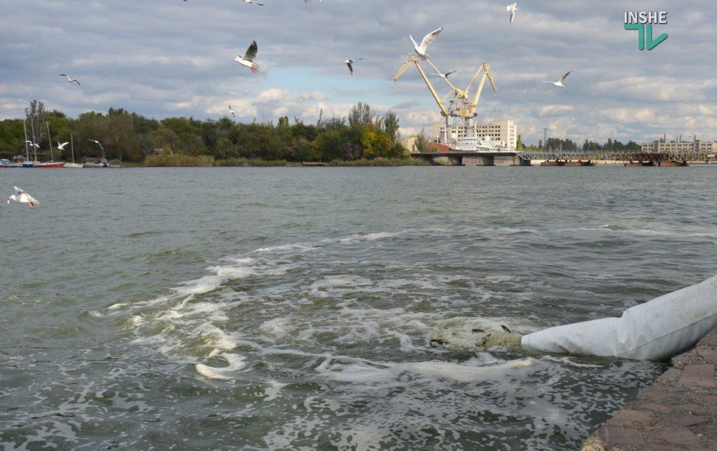 Зарыбление в Николаеве: в Южный Буг выпустили 255 тыс. экземпляров рыб (ФОТО и ВИДЕО) 29