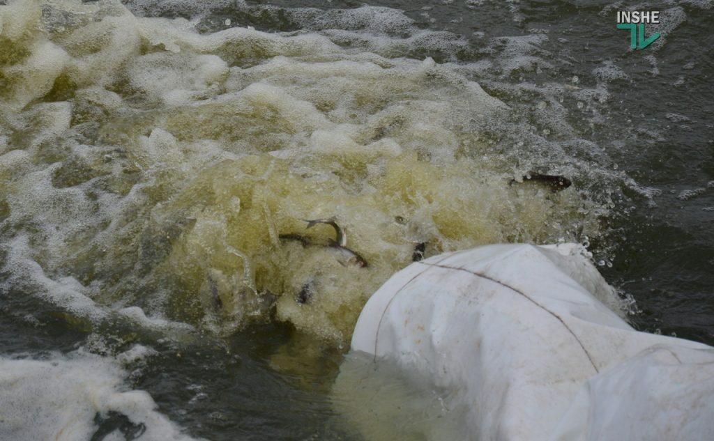 Зарыбление в Николаеве: в Южный Буг выпустили 255 тыс. экземпляров рыб (ФОТО и ВИДЕО) 31