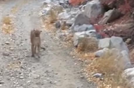 «Я думал, мне конец»: турист из Юты шесть минут убегал от преследовавшей его пумы (ВИДЕО)