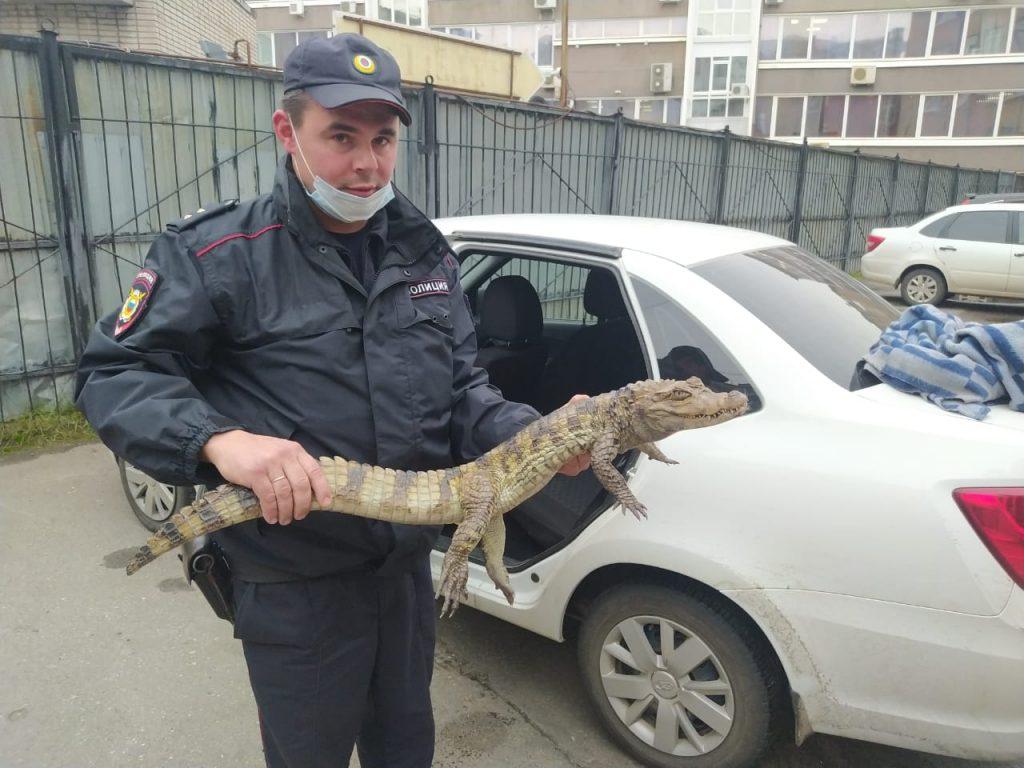 «Гоше холодно»: в России мужчина принес в отделение полиции живого крокодила (ФОТО) 5