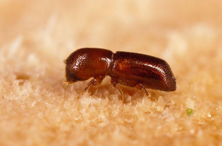 «Парк Юрского периода» — не такая уж и выдумка? Ученые впервые восстановили ДНК насекомых, застывших в янтаре
