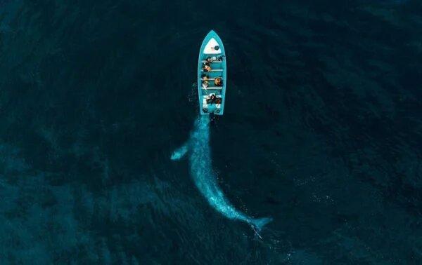 Опубликованы победители конкурса лучших фотографий с дрона (ФОТО)