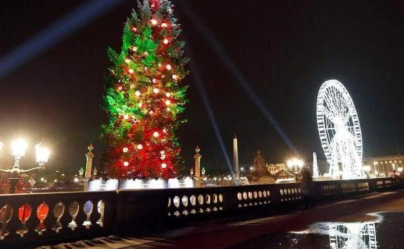 Во Франции рождественские елки включат в список товаров «первой необходимости»